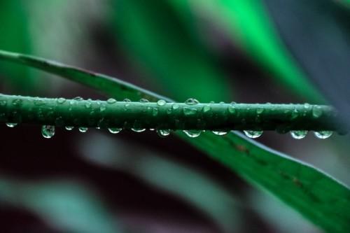 Gouttes pluie augmenter ses revenus