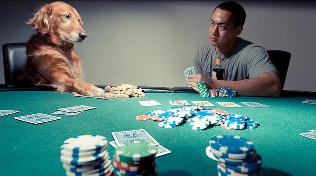 Chien poker