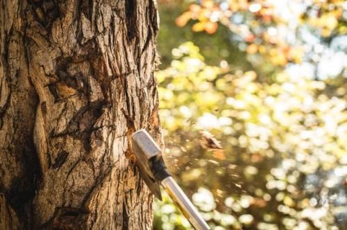 Hache arbre cost-killing