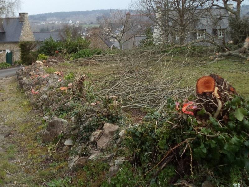 Terrain arbres pierre