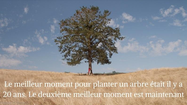 Le meilleur moment pour planter un arbre, c'est maintenant !