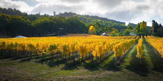 Investir dans une propriété viticole : est-ce un bon plan ?